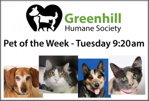 Greenhill Humane Society Pet of the Week
