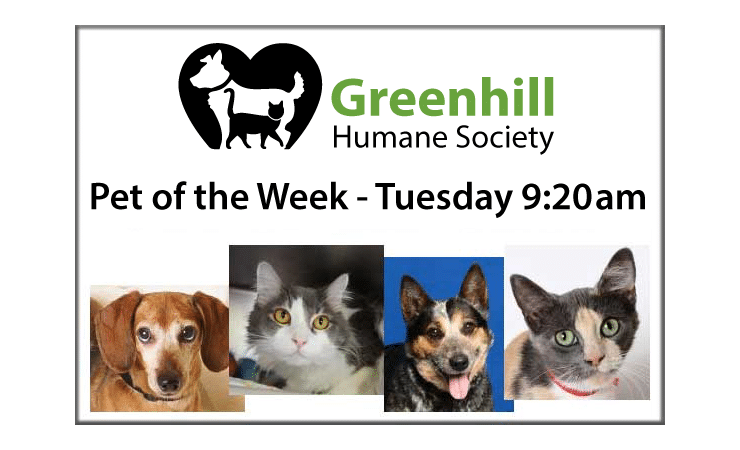 Greenhill Pet of the Week